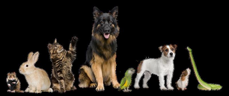 animal oxygen services